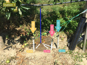 watermark bulbe irrigation